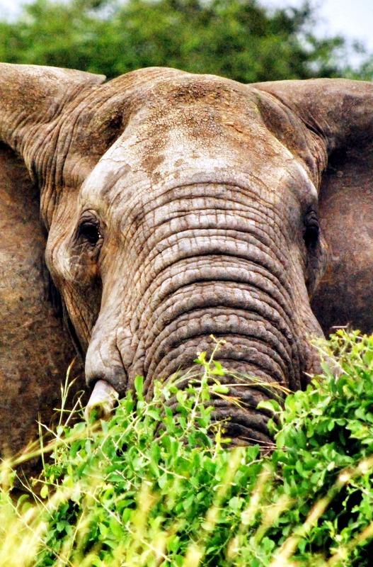 Kidepo Valley National Park, Uganda.