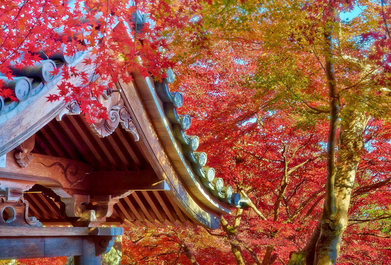 View of the roof of the Buddhist temple of Nosin-in in the district of Kyoto called Arashiyama in autumn