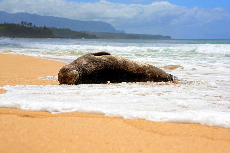 Poipu Beach (Kauaʻi)