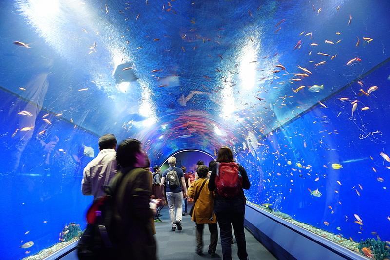 Aquarium Kaiyukan Osaka