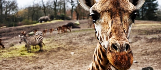 Things to Keep in Mind for a South African Safari