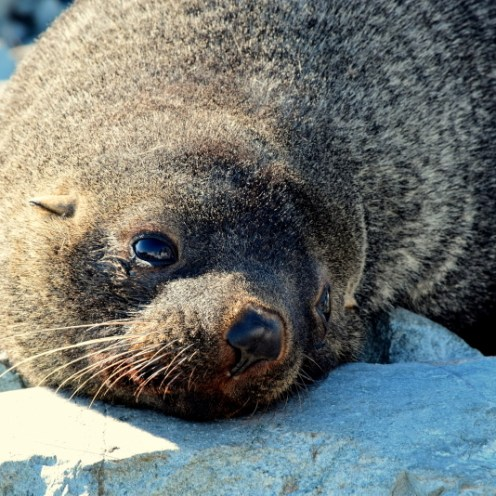 Wildlife you'll see on an Antarctic Expedition