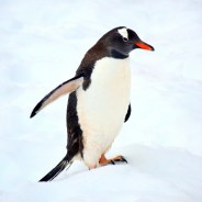 5 Tips For Travel to Antarctica