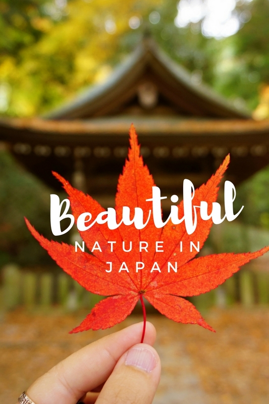Beautiful Nature in Japan- 5 Amazing Places You Should Visit