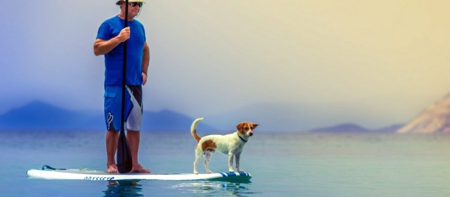 An Everyday Guide to Navigating Thailand with Your Dog