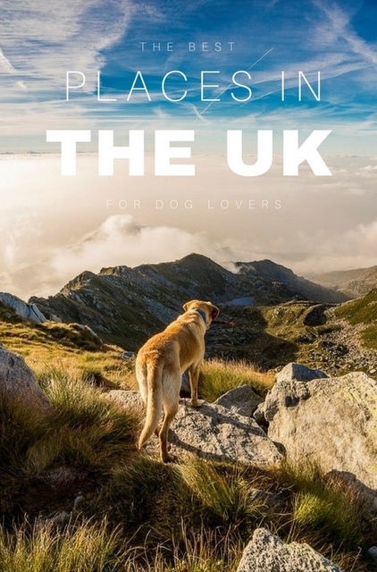 If you can't fathom the thought of a vacation without your best friend, the UK is an ideal country to visit.