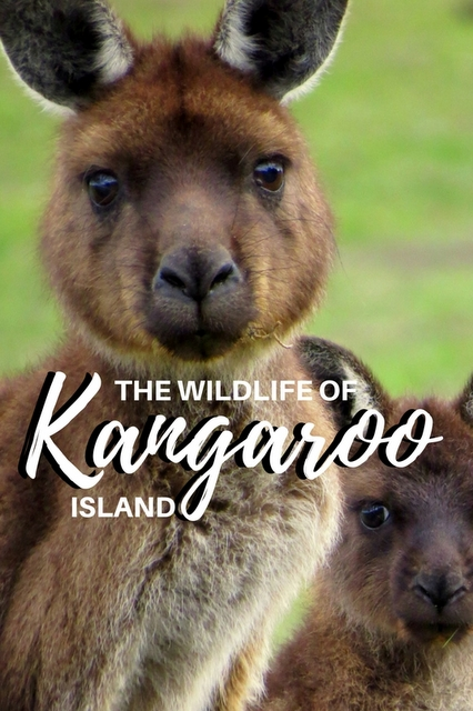 One of the best places in Australia where you can see such a large variety of iconic Aussie animals living in the wild.