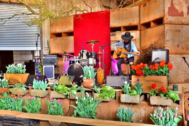 Table Cape Tulip Farm Tasmanias Tulip Season