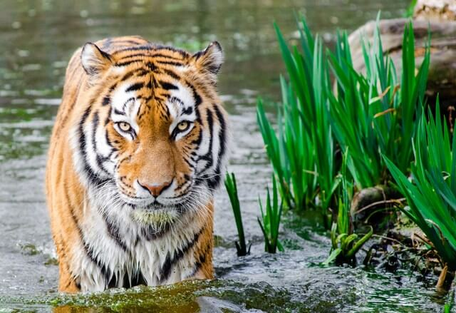 The area's rich wildlife includes tigers, black bears and elephants.