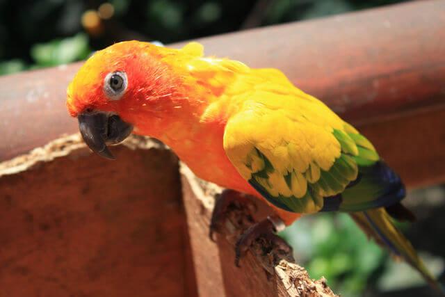 Kuranda Bird Sanctuary