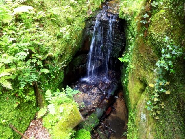 Shanklin Chine.