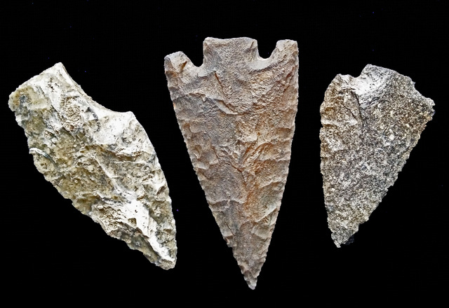 Discovering Florida's Past Through Fossils - Mapping Megan