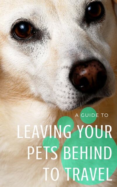Managing the anxiety of leaving your pets behind