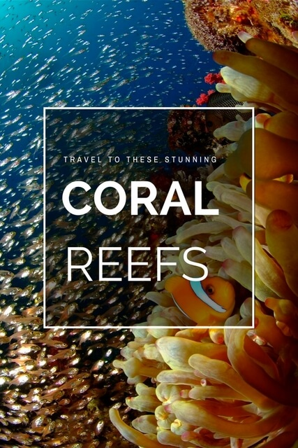 The following are five unique trips which will allow you to explore the true beauty of the world's coral reefs.
