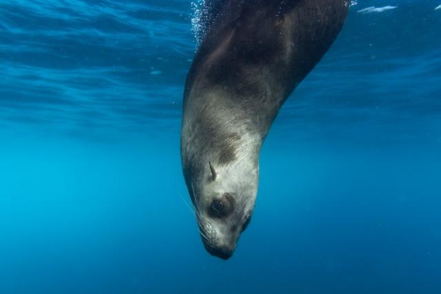 Seal RF