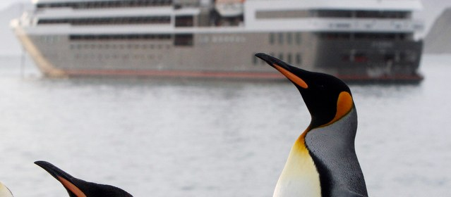What You Can Expect on a Luxury Antarctic Cruise