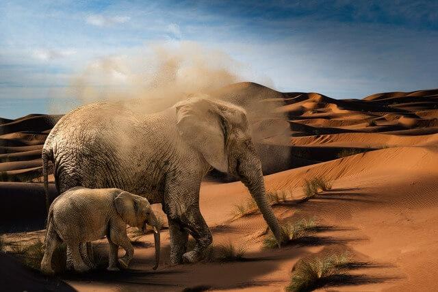 Desert Elephants RF