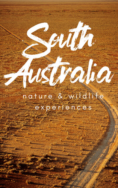 If you're after nature, beautiful national parks, and wildlife in South Australia, add these experiences to your travel bucketlist. These are things to do in South Australia for nature and wildlife!