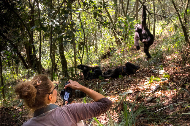 Need to Know About Gorilla Trekking Africa Conservation, Packing & Best Countries