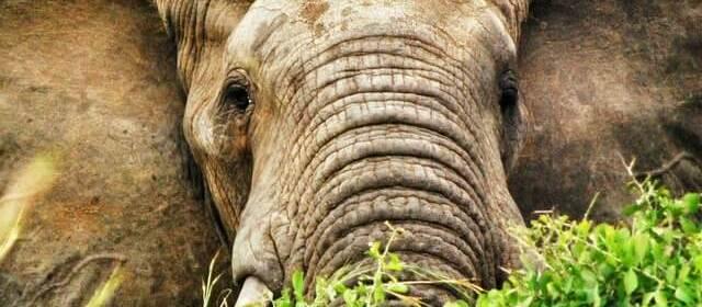 5 Reasons to Choose Uganda for Your African Safari