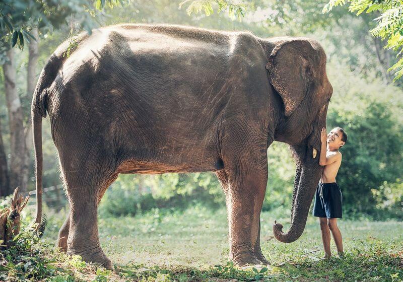Elephant tourism RF SE Asia