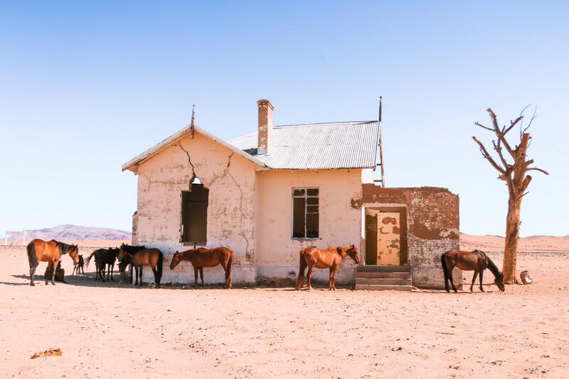 Etosha National Park Horses