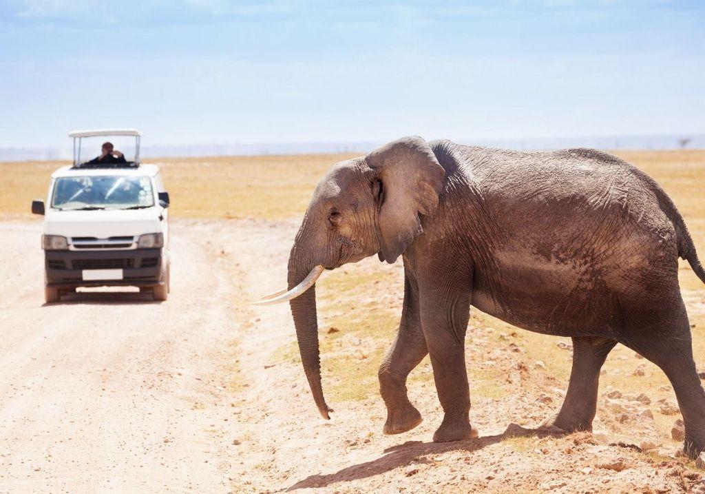 African safari elephant RF