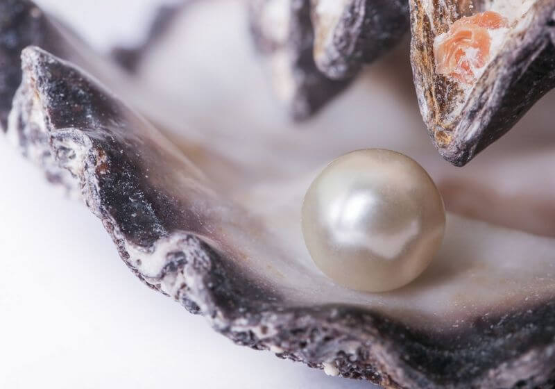 Pearl oyster shell RF