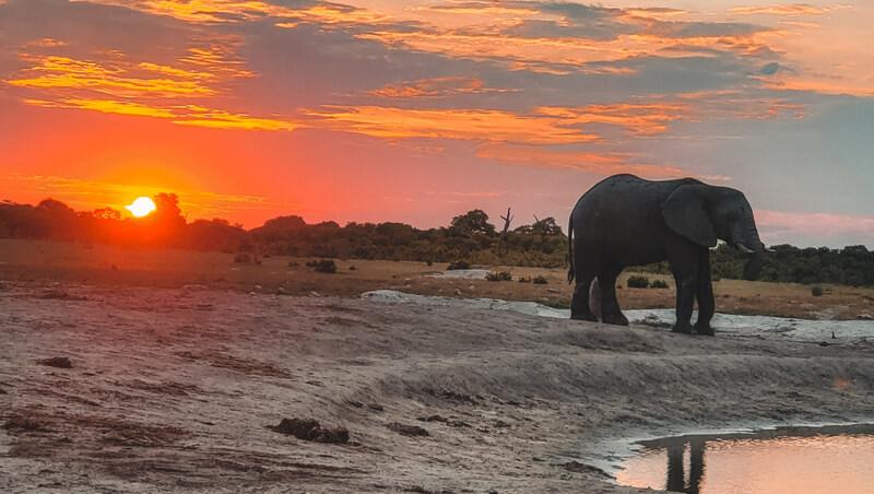 Elephant sunrise Paula Martinelli Botswana