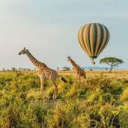 How Many Days to Spend on Serengeti Safari: Plan a Four Day Itinerary