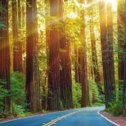 Road Trip from San Diego to San Francisco Itinerary