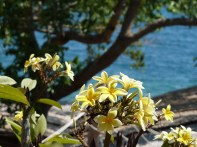 Many flowers can be seen in Nkhata bay even during the dry season