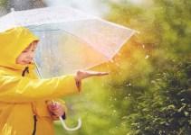 पावसाळा ऋतू मराठी निबंध Rainy Season Essay In Marathi