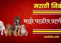 माझे पाळीव प्राणी वर मराठी निबंध Essay On My Pet Animal In Marathi