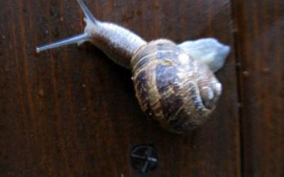 Slakken uit Limoges