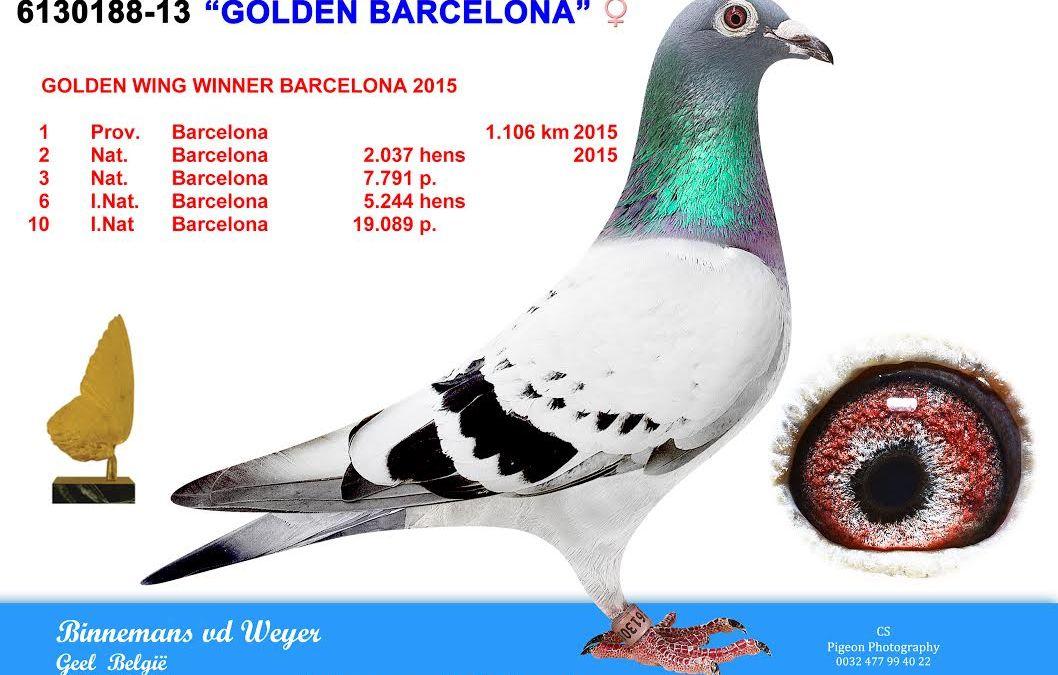 Comb. Binnemans-Van de Weyer, Geel (B) … Belgische Barcelona-toppers in 2015 (2)