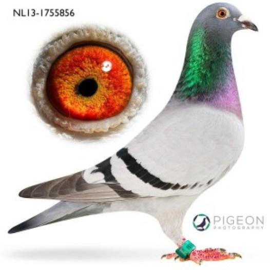 NL13-1755856 Evi verkleind
