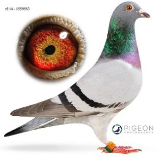 NL14-1559583 Rena