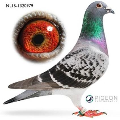 NL15-1320979 Silke verkleind