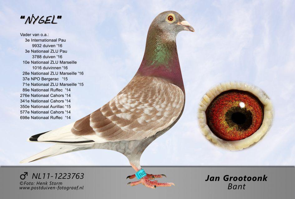 Jan Grootoonk, Bant … Groot Kampioen op alle Marathonvluchten (deel 2)