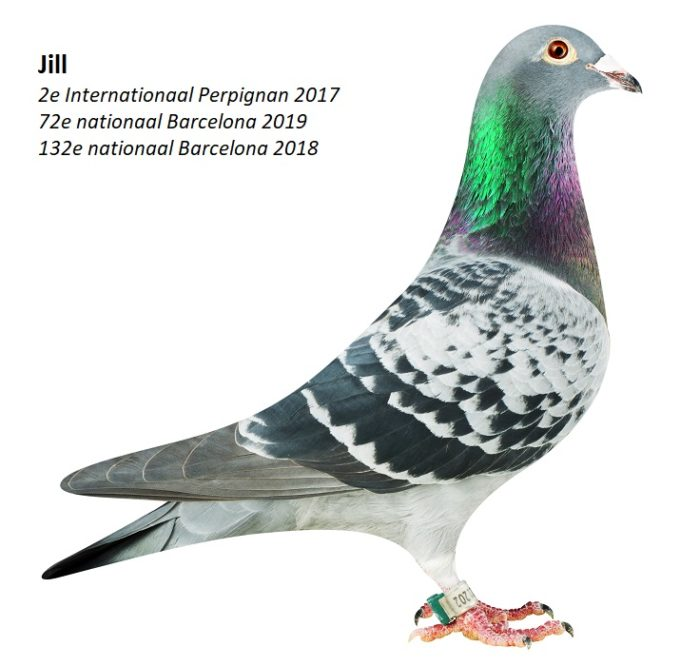 Jelle Jellema, Nijverdal, seizoen 2019 (3)