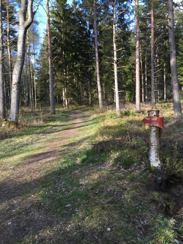 Början på skogen markeras med en röd pil. Sedan blir det tätare, backigare och lite tekniskt. Foto: privat
