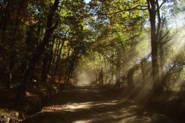 floresta-geres