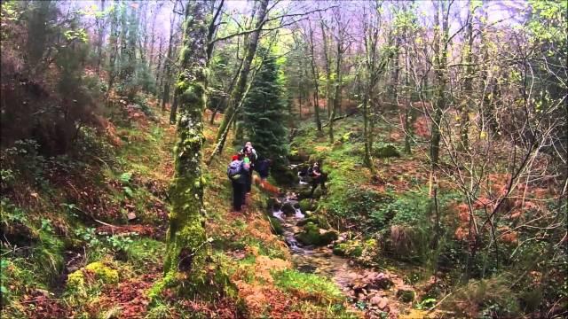 O Bosque Encantado – Serra da Cabreira