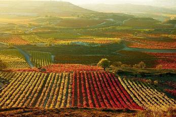 ruta del vino 1