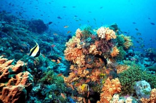 arrecifes-veracruz