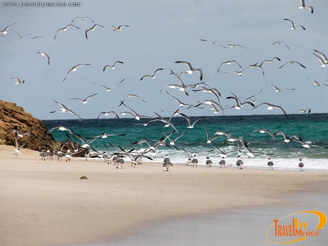 islas marieta