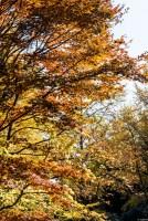 紅葉 2013 ある秋の1日