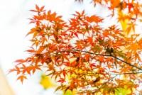 根津神社の紅葉