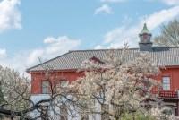 小石川植物園と桜